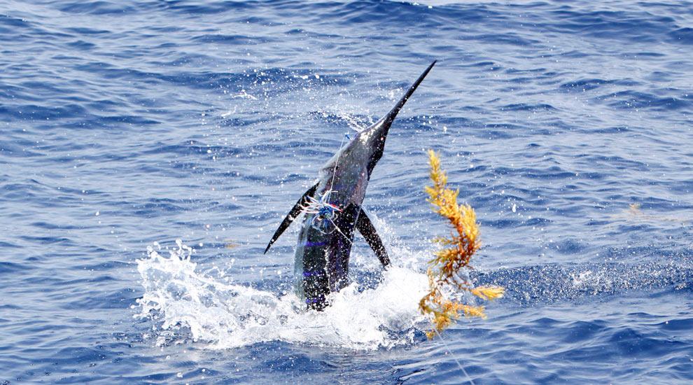 Fishing in destin florida fishtrack com for Destin shark fishing