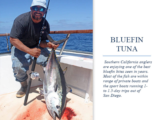 Fishing report gear up for so cal bluefin tuna for Southern california fishing report