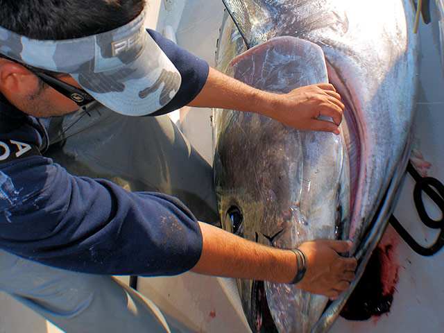 Fishing tips handling big fish part 2 fishtrack com for Fish handler s disease