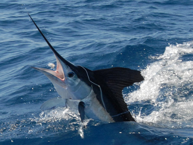 Fishing virginia beach virginia fishtrack com for Deep sea fishing va beach