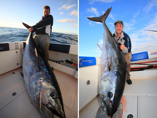 Giant Atlantic Bluefin Tuna