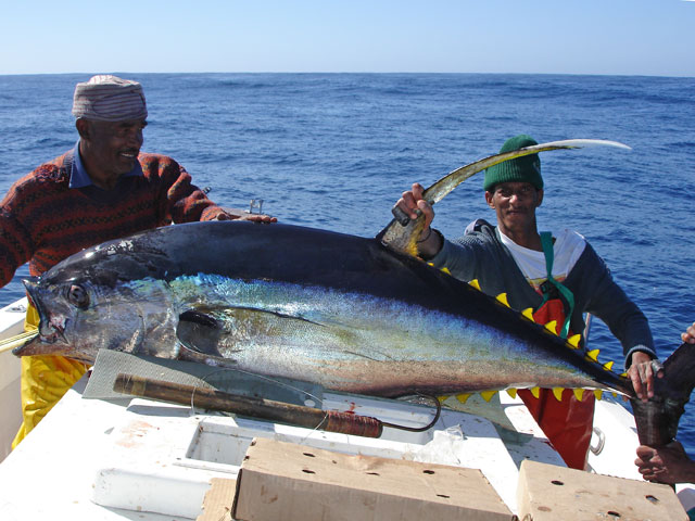 top fishing tips for cape town yellowfin tuna fishtrackcom