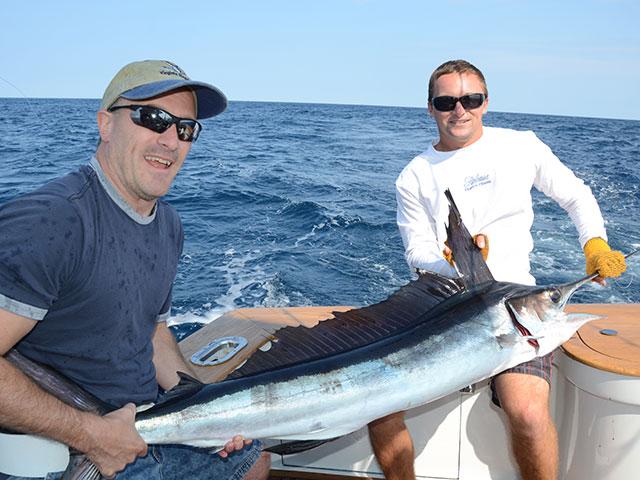 How to Catch White Marlin   FISHTRACK.COM