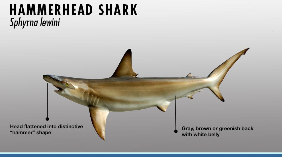 essay shark mobile
