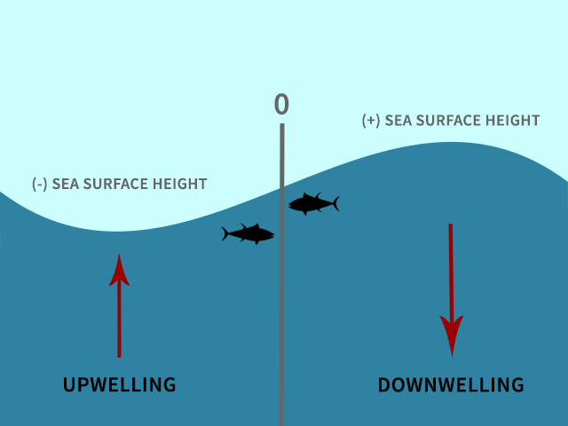 How to altimetry maps fishtrack though simplified this illustration shows the basic relationship between sea surface height and upwellings and downwellings ccuart Gallery