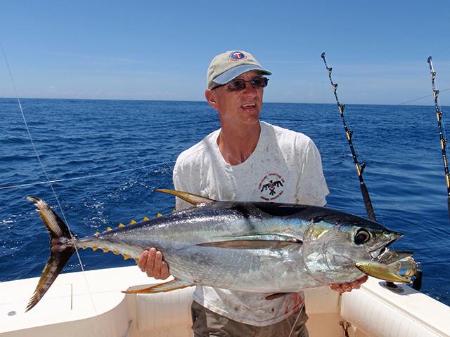 Yellowfin tuna tactics fishtrack com for Drone surf fishing