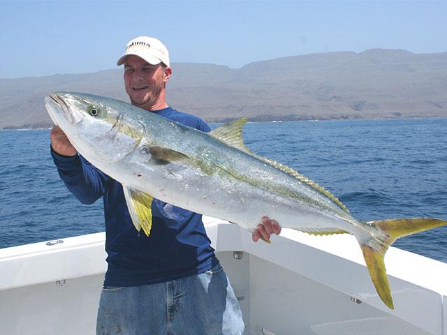 Catching Island Yellowtail | FISHTRACK COM