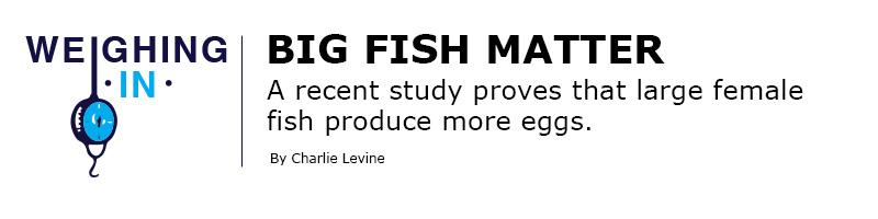 SURF NEWS PHOTOS Big Fish Matter