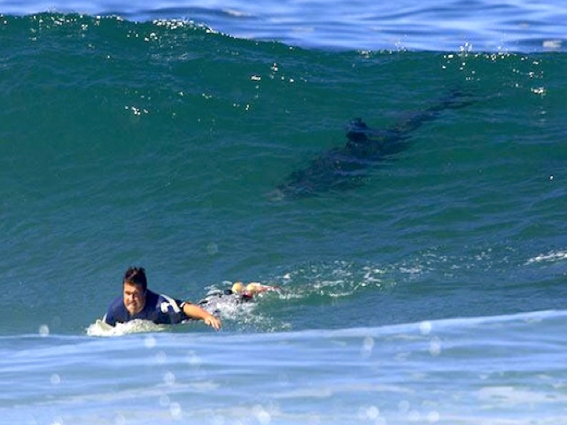 Ocean Oddities Shark Attacks Hit New High Surfline Com