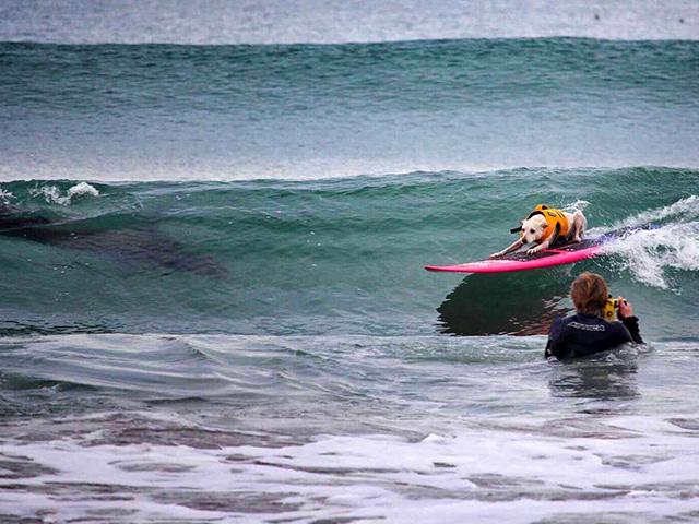 Laguna Beach Surf Competition