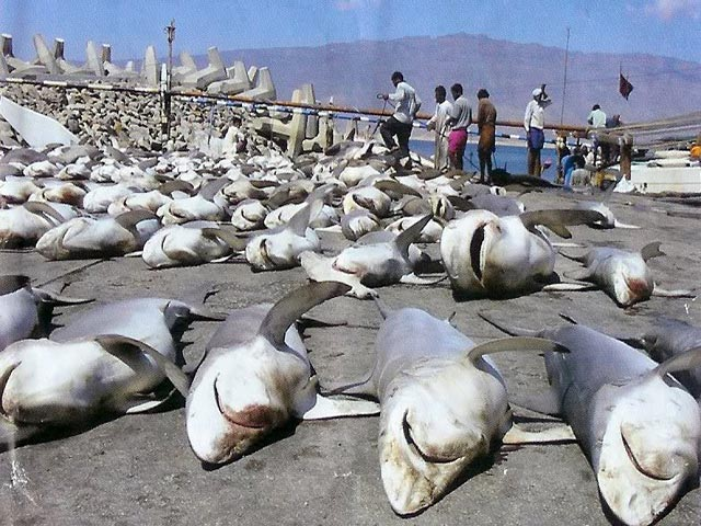 Shark Sightings In Panama City Beach The Best Beaches World
