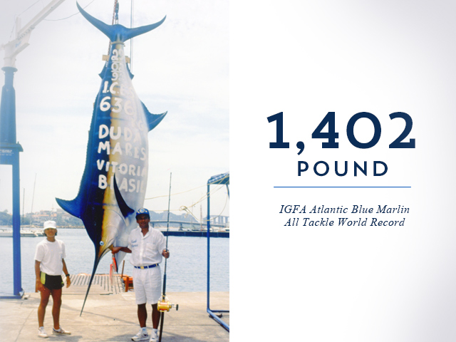 Image result for atlantic blue marlin paulo amorim